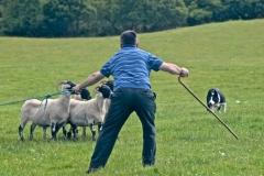 Events_sheepdogTrials_1