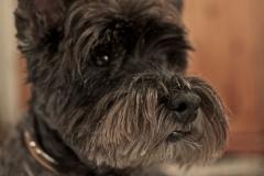 Pets_animals_6