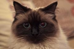 Pets_animals_7